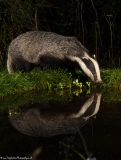 BadgerReflection