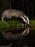 BadgerReflection