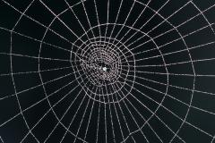 Spider web spiral