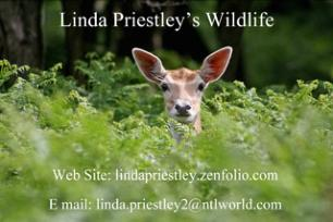 Linda Priestly's Wildlife