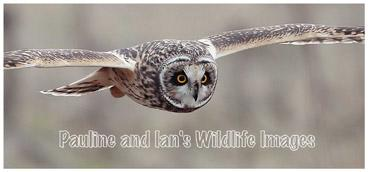 Pauline and Ian's Wildlife Images