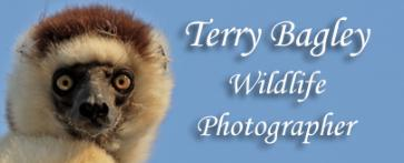 Terry Bagley Wildlife Photographer