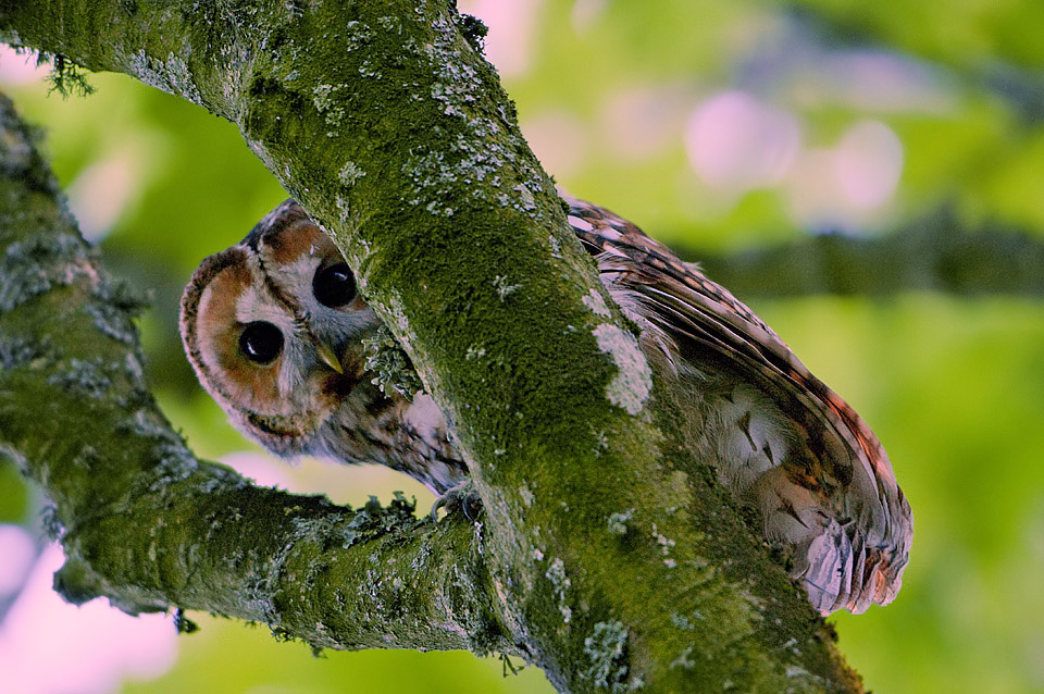 Spotted by a Tawny Owl