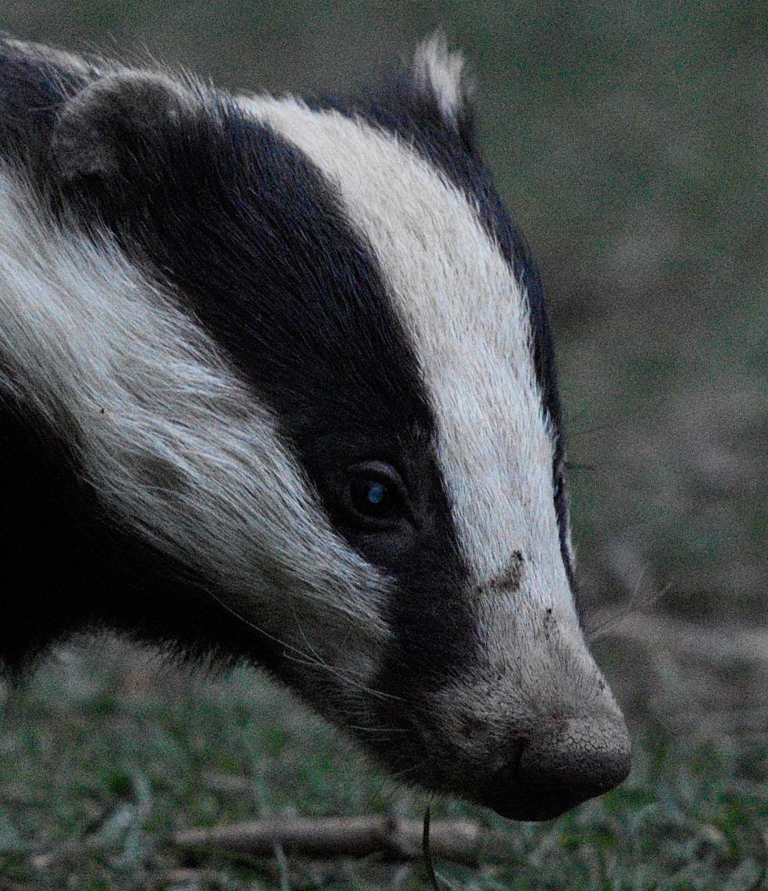 D7200 Badger ISO 2500 no NR