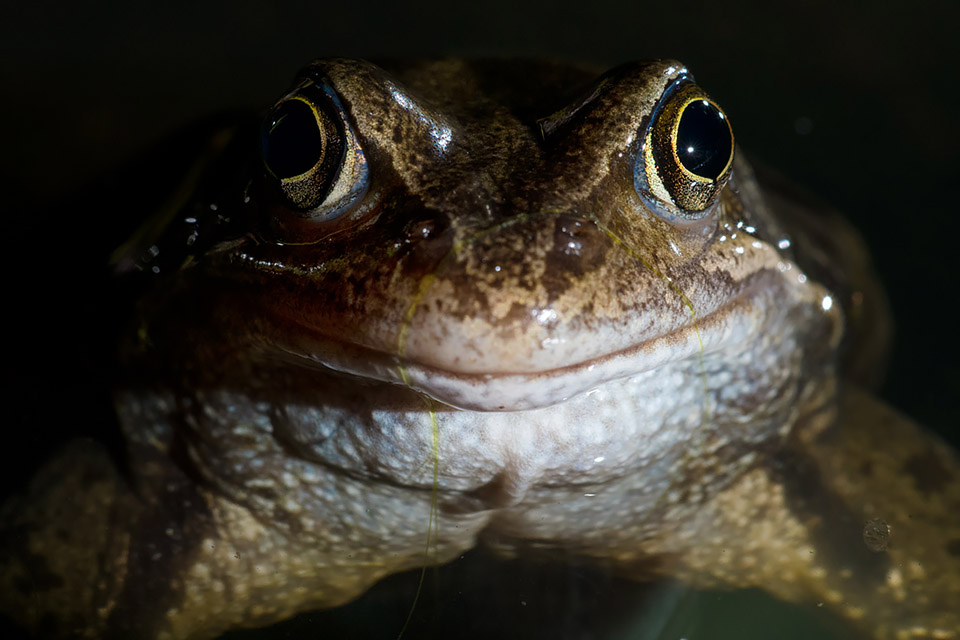 Smiley frog portrait